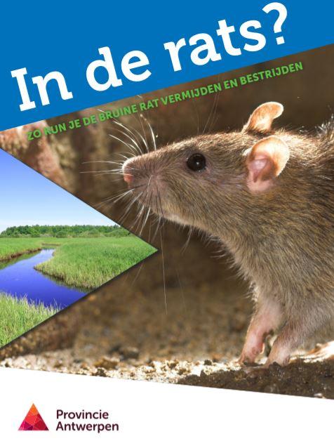 brochure in de rats